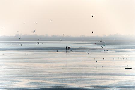 Baie de Somme, mer, couple oiseaux