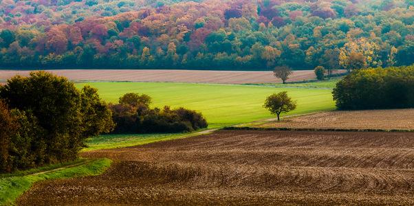bourgogne champs
