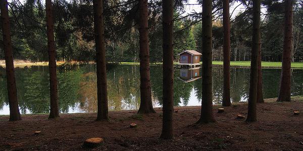cabane, forêt