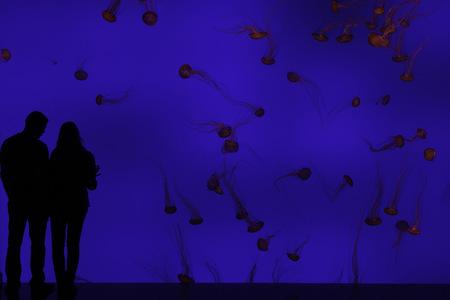 Le mur de méduses