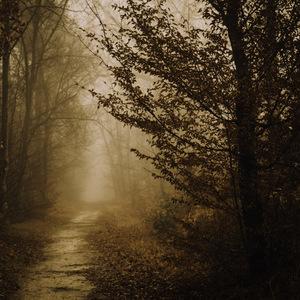 Petit tour dans la forêt enchantée