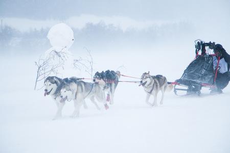 course, chien, Montagne, neige