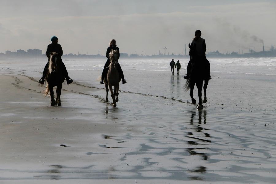 chevaux, plage