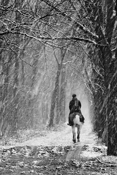 Cavaliere sous la neige