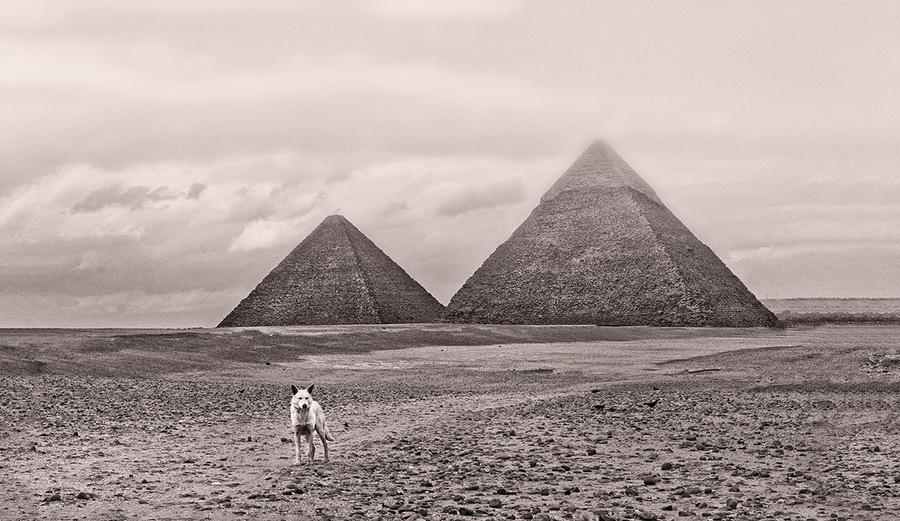 Pyramide,chien