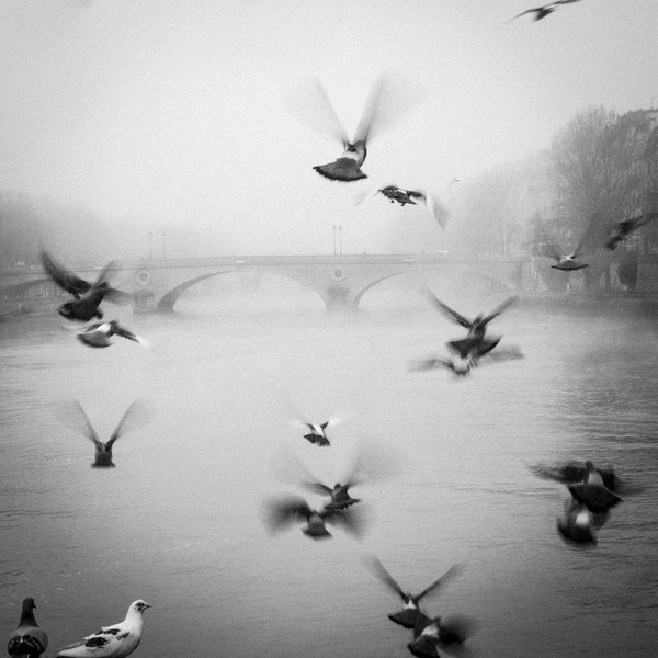 Paris, bords de Seine, Pigeon, brume