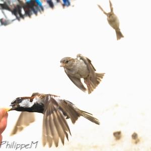 Oiseaux, sur-exposition