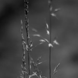 fleur, herbe