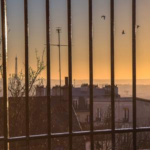 tour eiffel, coucher de soleil, Oiseaux, Contrejour