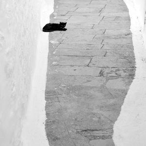 chat noir; ruelle grecque; patmos; grece;