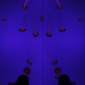 Le mur de méduses 2