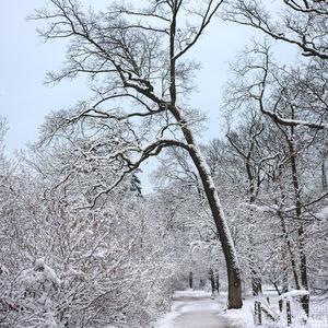 neige, forêt