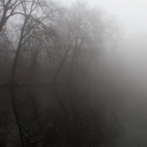 brume, eau, Lac, Arbre
