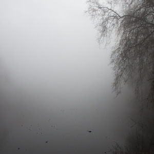 brume, Lac, Arbre