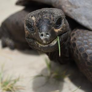 animal-tortue