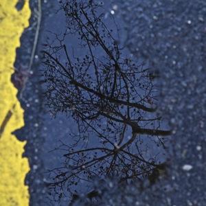 reflets, macadam, arbres, chemin