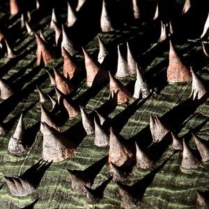 Palo borracho ou bâton ivre  le tour d'un arbre fascinant