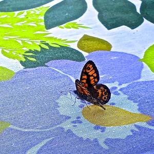 Nappe à fleurs et papillon