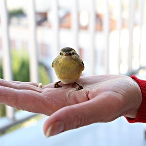 J'ai sauvé, un petit oiseau, qui s'est cogné contre la vitre de mon balcon.