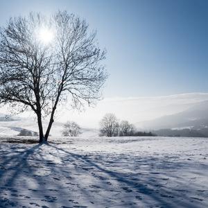 contre-jour, neige, Arbre