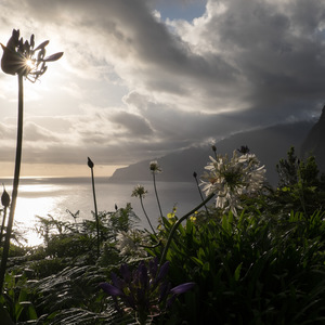 mer, Montagne, lumière, fleur