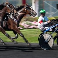 course de chevaux, attelé vincennes