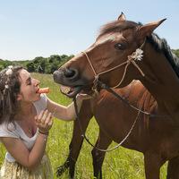 cheval, portrait, carotte