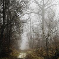 Brouillard en foret