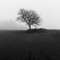Champ dans le brouillard #1