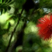Cuba, jardin, tropical, atmosphere