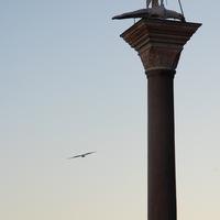Lever les yeux sur la place Saint Marc et voir l'oiseau, seul dans le ciel pur de janvier...