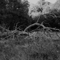 arbre parc rousseau