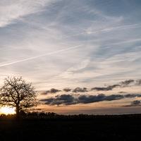 contre-jour, Ciel ; nuages ; coucher du soleil, Arbre