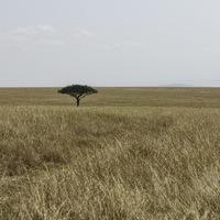 Plaine Masaï Mara